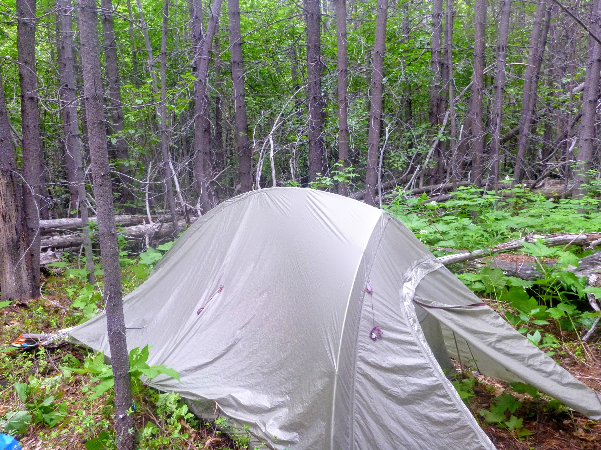 Setting up camp in the nasty-ass bushwhack.