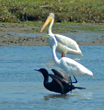 Photo: 139. Ah, yes, just another day on Elkhorn Slough. That's not an image you get every day!