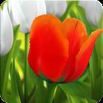 My Tulip 3D live wallpaper Icon