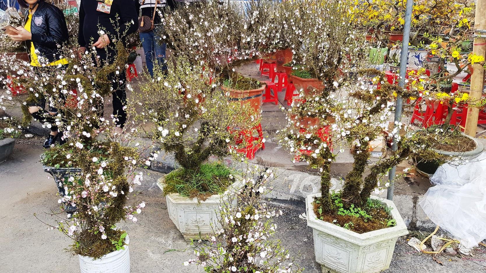 Chợ hoa Tết 2020 đường Lê Hồng Phong ở Hải Phòng 12