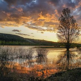 Despedida del sol by Lourdes Ortega Poza - Landscapes Prairies, Meadows & Fields ( atardecer, sol, arboles, ocaso, nubes, lago )