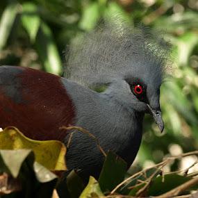 The Red Eye by Alex Santos - Animals Birds ( bird, nature, animal )
