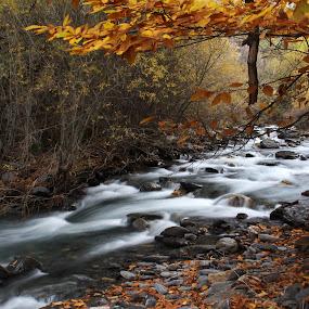 Autumn River by Cornelis Cornelissen - Nature Up Close Water ( orange, moving water, stream, guejar sierra, sierra nevada, autumn, rio genil, river )