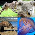 Угадай животный мир icon