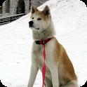 Akita Dog Live Wallpaper icon