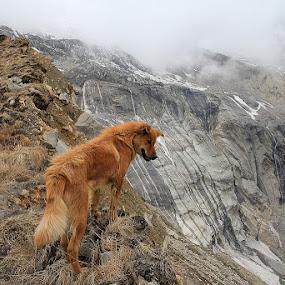 Lone dog by Bim Bom - Landscapes Mountains & Hills ( red dog mountains himalaya nepal fog myst annapurna )