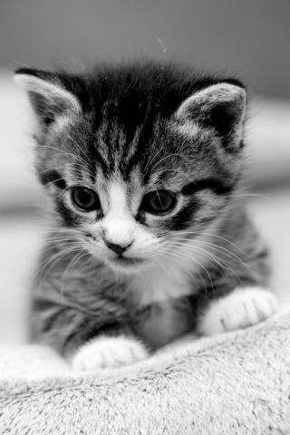 Cute Kitten Wallpapers Screenshot 5