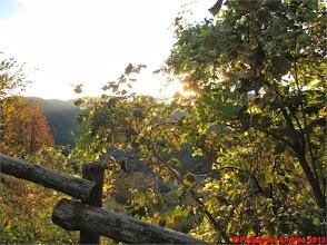 Photo: IMG_3958 il sole tra i rami