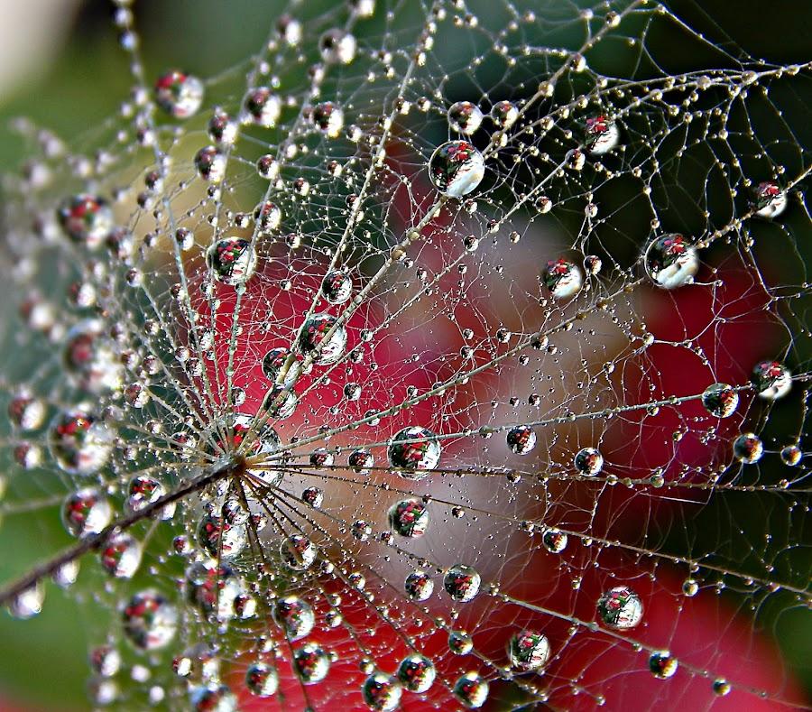 Life Of The Drops Galaxy by Marija Jilek - Nature Up Close Natural Waterdrops