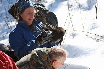 Photo: Tim Ginnett, UWSP professor of wildlife, determines the sex of a black bear cub