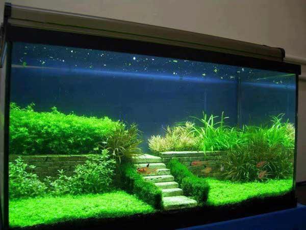 aquarium decoration idea screenshot