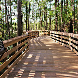 by Donna Van Horn - Buildings & Architecture Bridges & Suspended Structures ( grassy waters preserve )