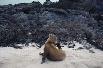 Photo: Itchy Seal