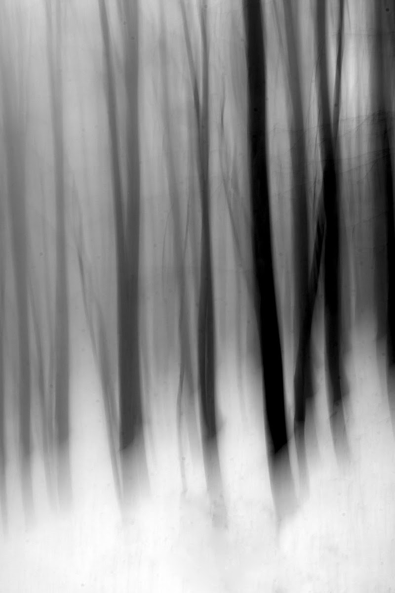 L'oscura selva di Alescia