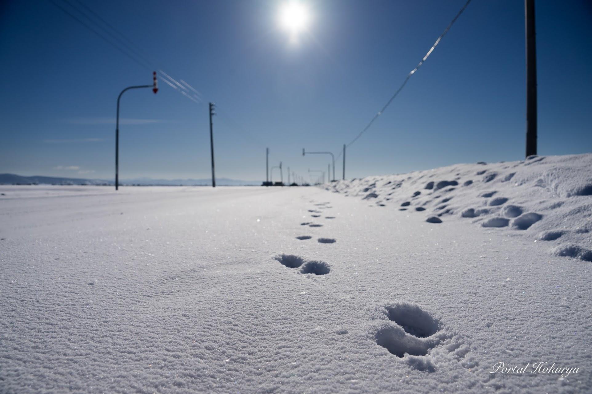 歩道の足跡