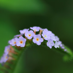 Small Orange Dot by Hafizi Ahmad - Nature Up Close Flowers - 2011-2013