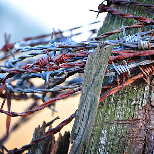 barbed wire-1.jpg