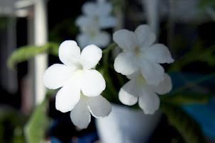 部屋を飾る花