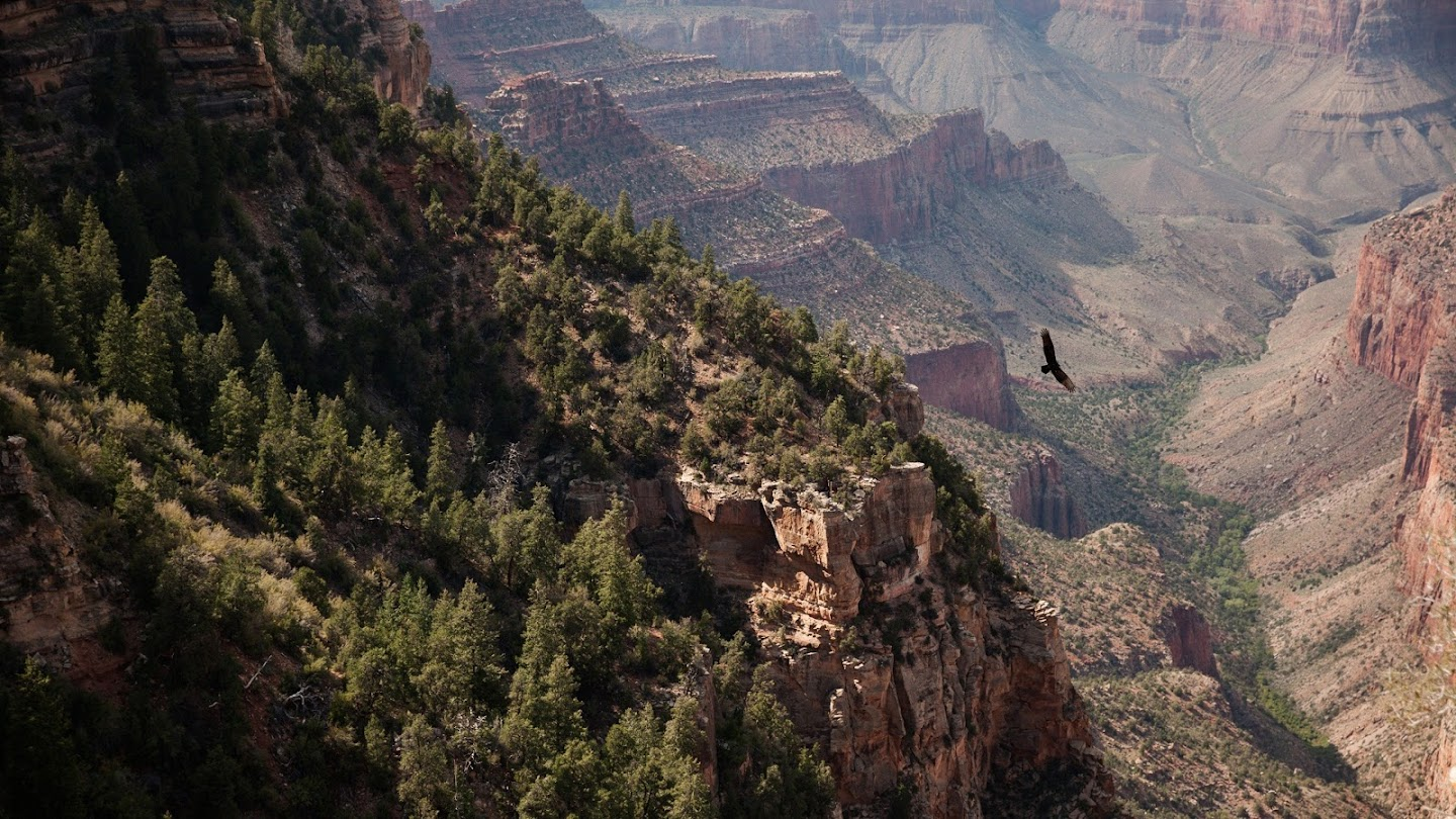Watch America's National Parks live