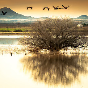 Cranes and Tree by Ronnie Sue Ambrosino - Landscapes Waterscapes ( water, reflection, tree, sandhill crane, crane,  )