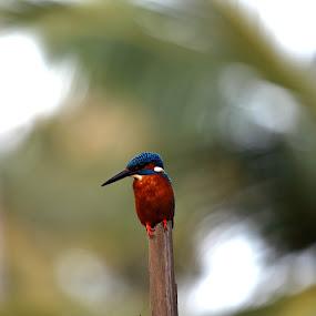by Kedar Banerjee - Animals Birds