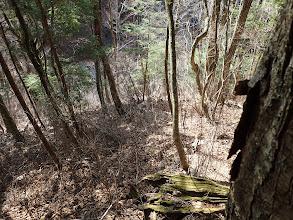 林道が見えてくる