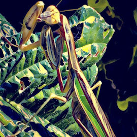 Alien On Plant by Roxanne Dean - Digital Art Animals ( face, plant, insect, teeth, creepy )