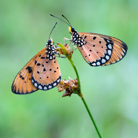 ^ Couple ^ by Yan Kebak - Animals Insects & Spiders