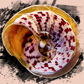 Abstract Sea Shell by Dave Walters - Digital Art Abstract ( macro, nature, lumix fz2500, abstract sea shell, colors, sea shell )