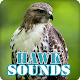 Download Hawk Sounds Ringtone Collection For PC Windows and Mac