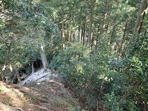 林道が見えてきた所で左へ