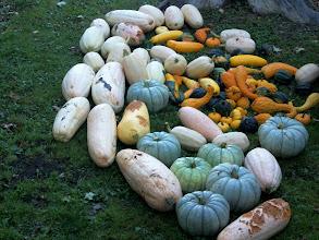Photo: An average haul