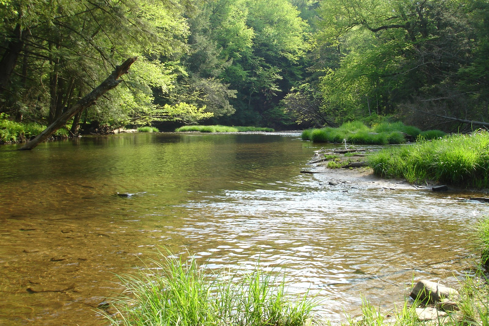 File:Kinzua Creek.JPG