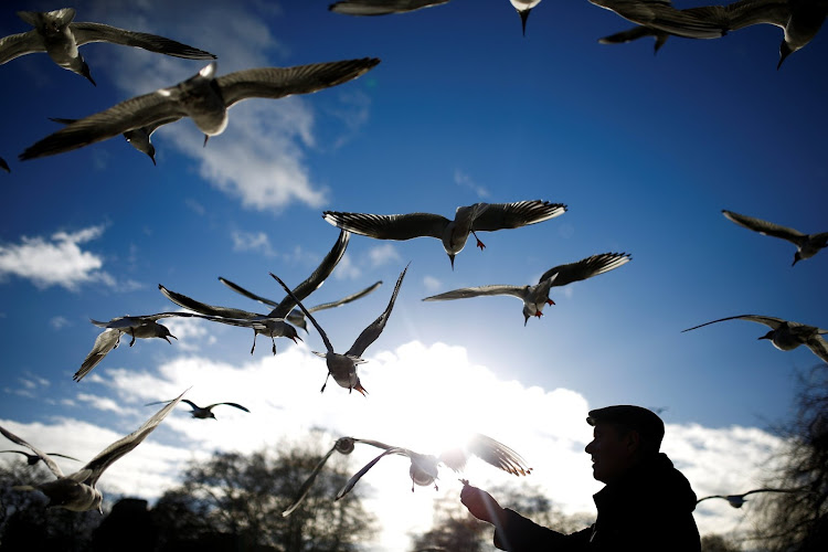 A man feeds birds in St James Park in London.