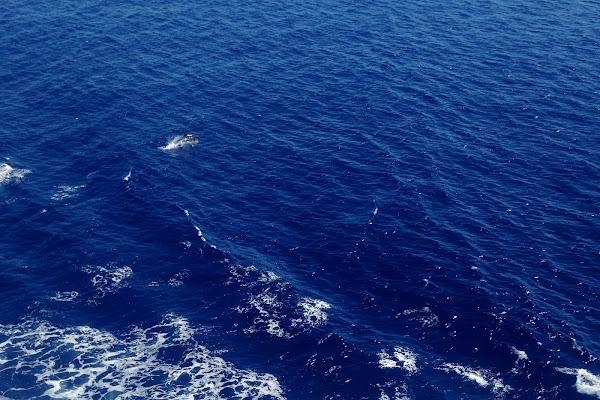 Un delfino nel Blu di scerda