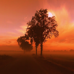Fog... :-)  by Ana Wisniewska - Instagram & Mobile Android