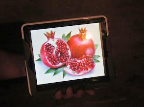 Photo: Oppaamme hyödynsivät hyvin tabletteja opastuksessaan - tässä opas selostaa meille granaattiomenaa