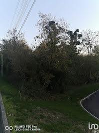 terrain à Sainte colombe (77)