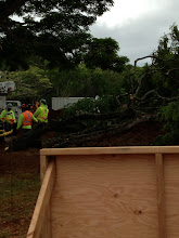 Photo: There were already huge branches cut down!