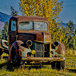 Resting and Rusting by Barbara Brock - Transportation Other ( abandoned truck, vehicle in the field, rusty truck, vintage truck, rusted truck, old truck, abandoned vehicle )