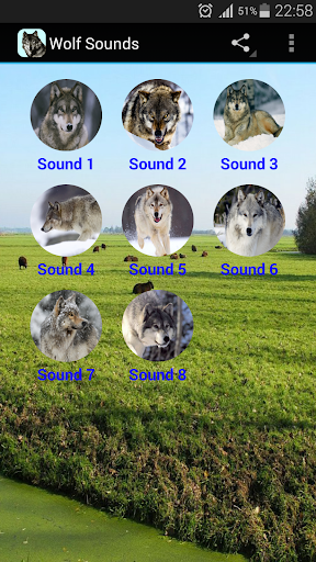 Wolf Sounds Free