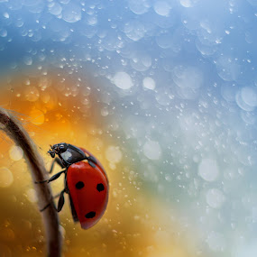 Ladybug on beautiful background as magic by Grigor  Ivanov - Animals Other ( plant, lawn, botany, colorful, bright, wildlife, leaf, beauty, insect, insects, bokeh, spring, sun, macro, life, bugs, nature, fresh, sunny, wings, light, flower, closeup, biology, animal, flora, grass, colors, beautiful, close-up, field, blurred, environment, red, season, effect, color, background, outdoors, summer, bug, ladybug, day, garden, natural, small, entomology, design )
