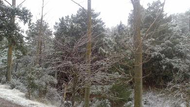 Photo: El bosque nevado.