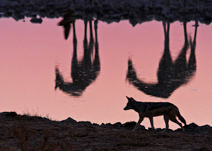 Photo: Waterhole, Namibia
