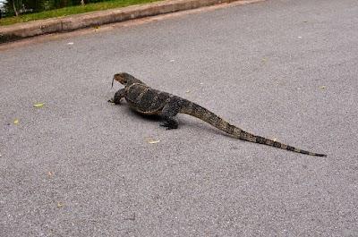 A monitor lizard in Lumphini Park