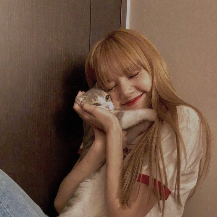 lisa; cats pets cute