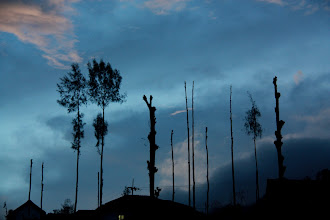 Photo: Trees denuded by the eruption, Bromo