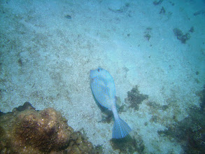 Photo: Filefish