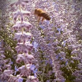 by Dawn Morri Loudermilk - Flowers Flower Gardens