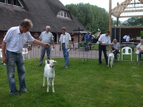 Photo: Rubriek 1: witte lammeren geboren na 10 februari 2012.